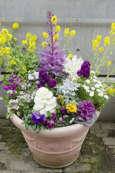 Potted planting 3