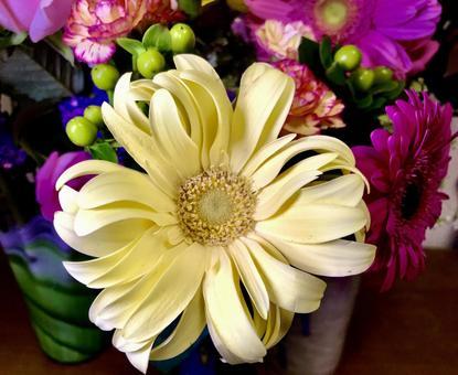 Gerbera 1 yellow arrangement