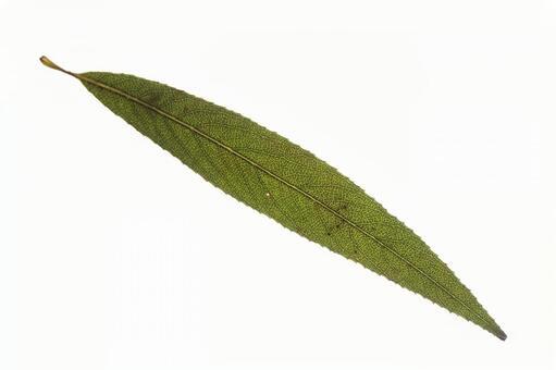 녹색 한장 잎 (장방형) 2