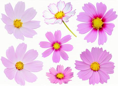 Cosmos set * See below for cutout path