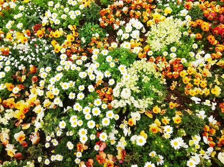꽃 피는 오렌지와 노란색과 흰색 꽃의 융단