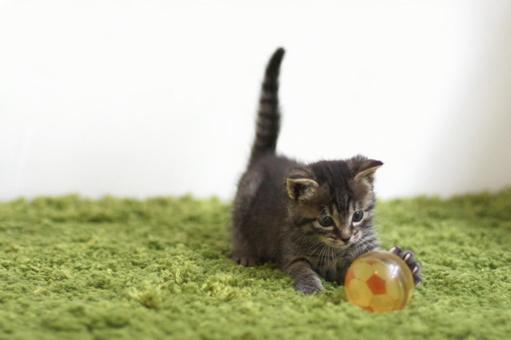 Kitten playing soccer
