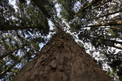 If you look up at the cedar tree