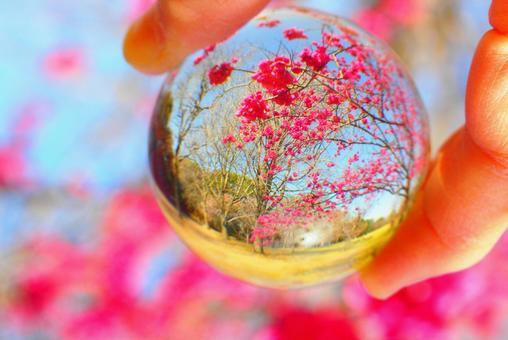 ガラスボールの中のハナモモ(花桃)