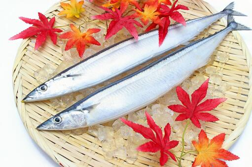 Fall autumn saury _ ___ lower ice