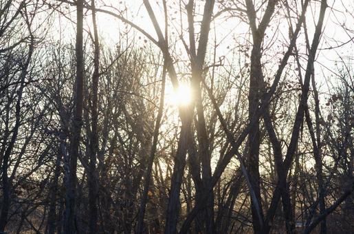Winter trees in winter 15