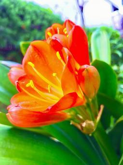 붉은 꽃 난초