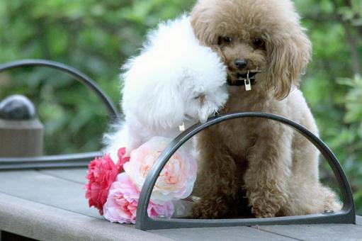 White dog and brown dog