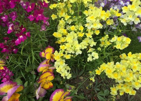 봄의 화단