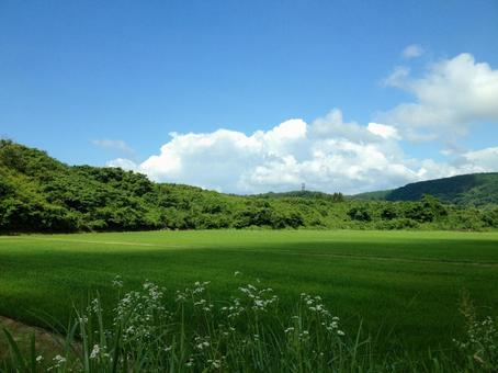 Early summer countryside