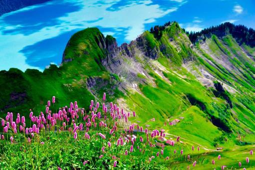 스위스 산의 풍경