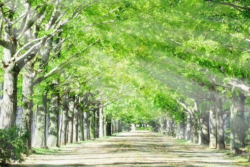 日光落在一排樹上