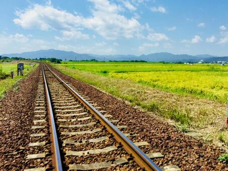 Railroad tracks and yellow countryside