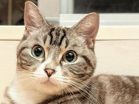 Cute up cat image of a tabby cat staring