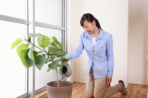 女性提高水植物1