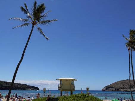 하와이의 풍경 11
