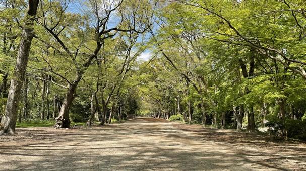 Shimogamo Shrine Tadasu no Mori