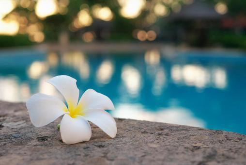Tropical pool and plumeria