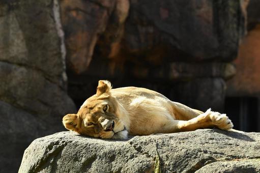 Zoo 19
