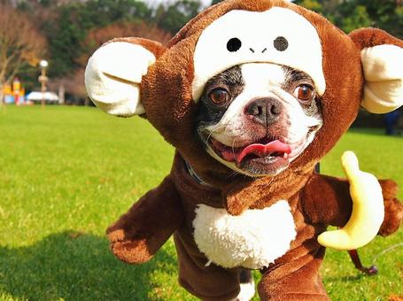 Dog birth year