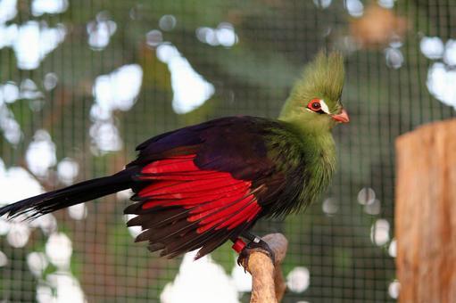 Beautiful bird 5