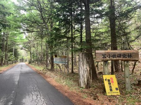 Tomakomai Research Forest Hokkaido University Hokkaido Nature 100 Selections Hokkaido