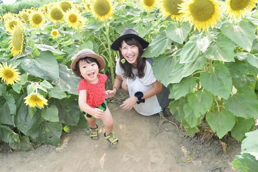 Sunflower and parent and child