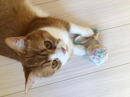 Cat playing with a ball of yarn 004