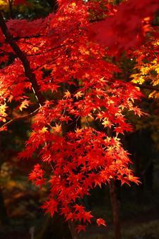 Mildly autumn leaves
