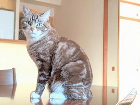 고양이, 고양이, 고양이, 앉아 고양이, 응시 고양이
