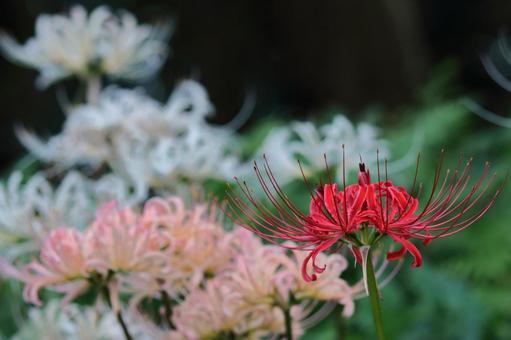 열정의 꽃
