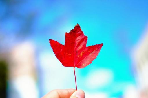 푸른 하늘과 낙엽