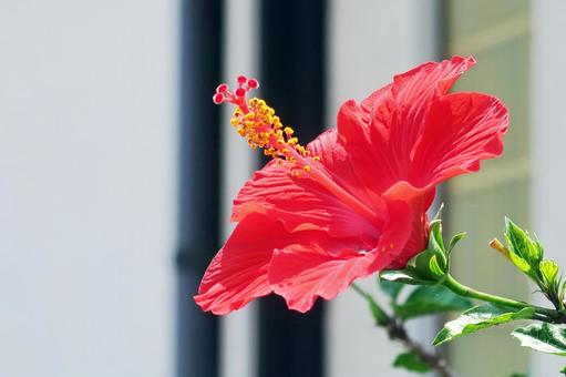 Flower of origin from the country of everlasting summer 02
