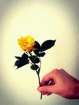 男手和一朵黃玫瑰