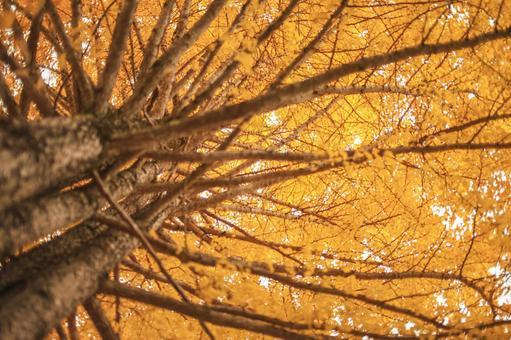 Autumn leaves 15