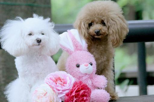 Brown white white dog