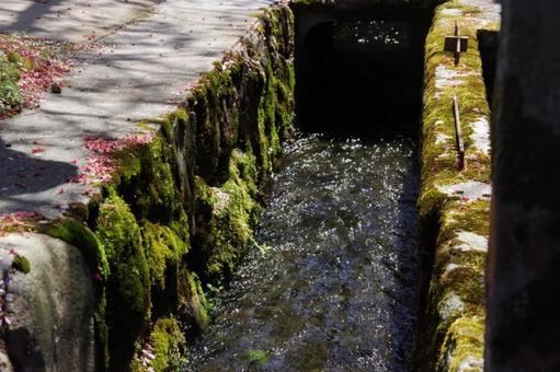 Waterway moss