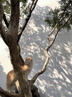 나무 타기하려고하는 고양이