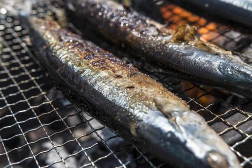 Freshly caught saury (saury) grilled over charcoal