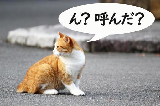 뒤돌아 고양이 대사 부