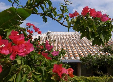Okinawan red roof tile blue sky and bougainvillea