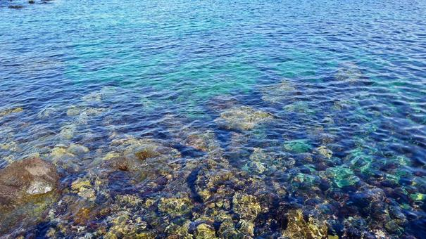 이즈 오시마 바다 낚시