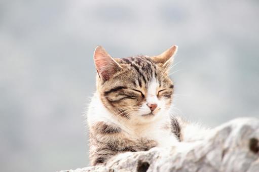 Cat 8 cat healed