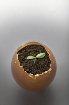 Sprout of a plant growing in an egg flowerpot