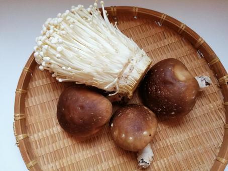 버섯 팽이 버섯과 표고 버섯