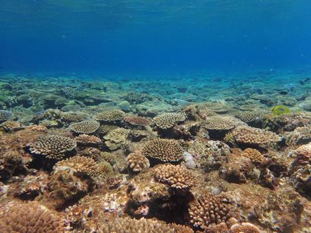 오키나와의 산호초