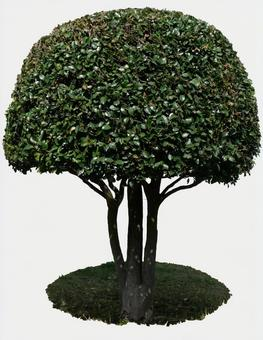 둥근 나무 나무 녹색 동그라미 마루 정원 정원 파트 자르기
