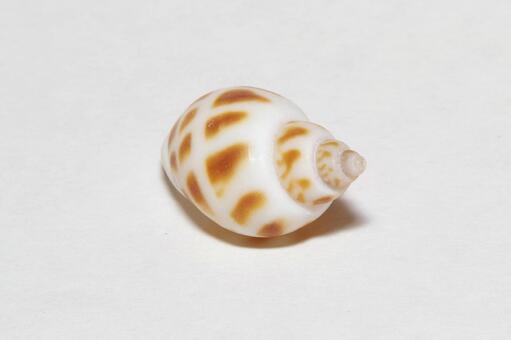 Seashell material