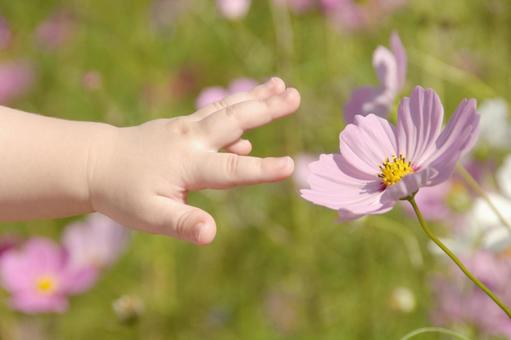 Cosmos and baby's hands