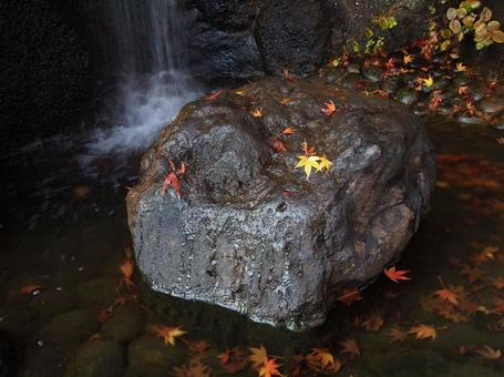 Autumn leaves on the falls